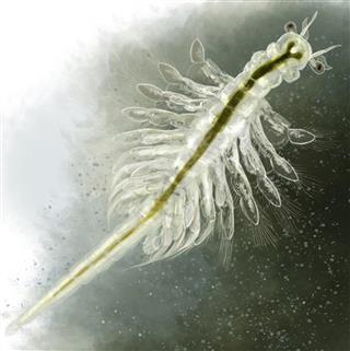 Common pond organism