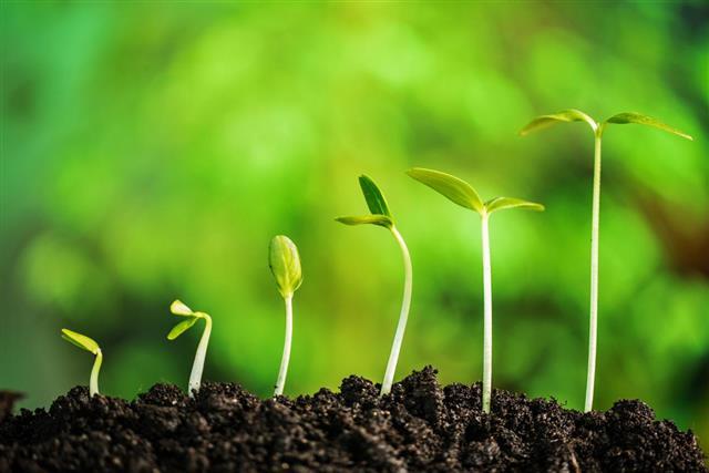Plant development concept