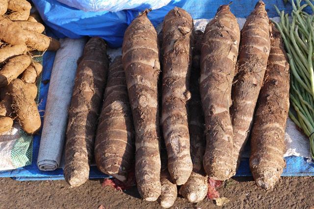 Cassava and yam