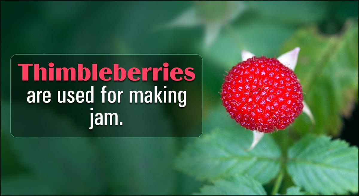 How to Grow Thimbleberries