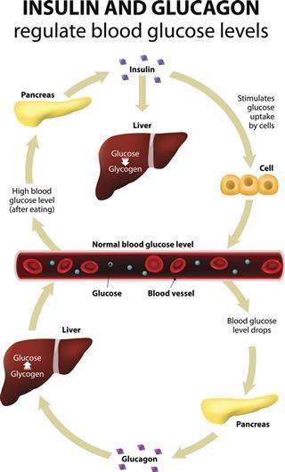 Pancreas hormones