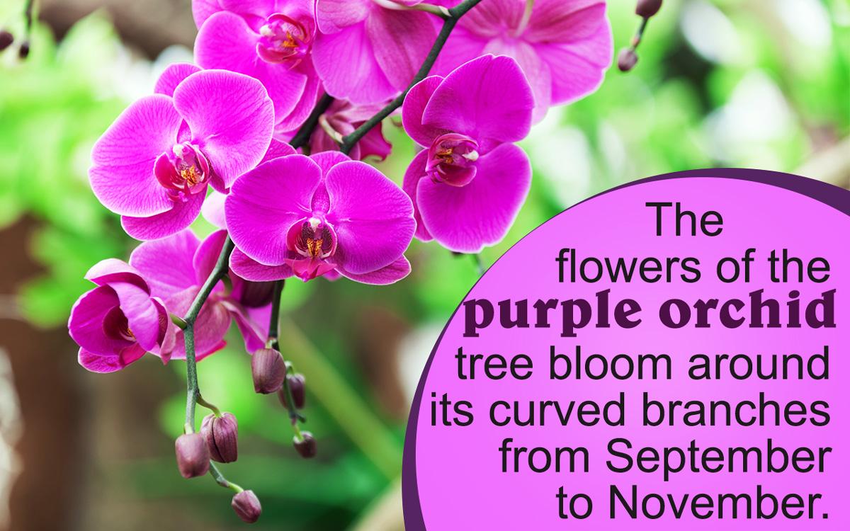 Purple Flowering Tree