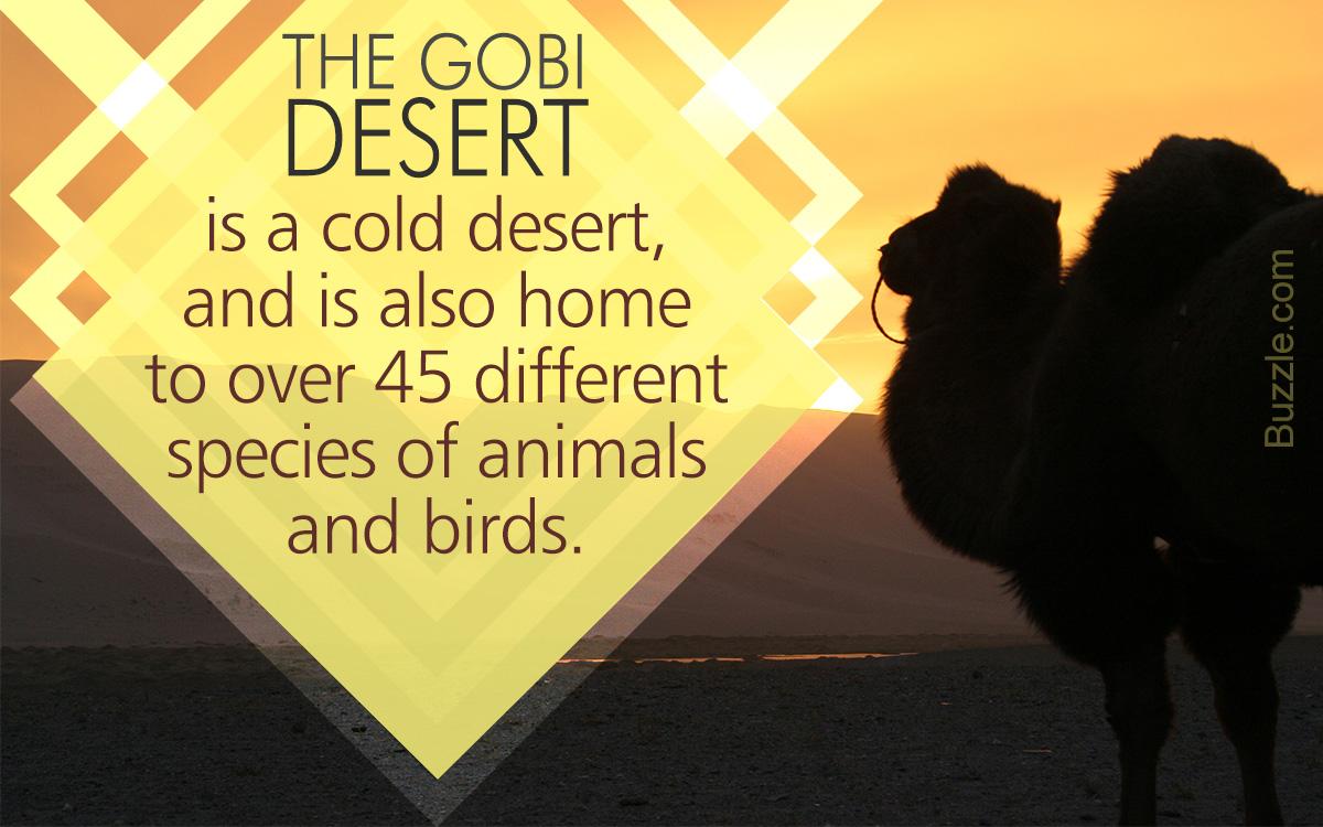 Gobi Desert Animals