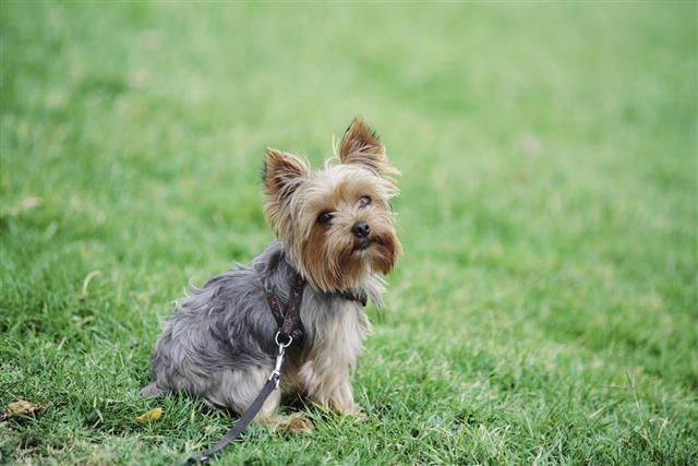 Cute dog sitting in grass