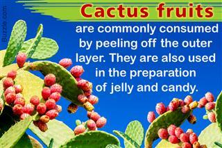 Cactus fruit facts