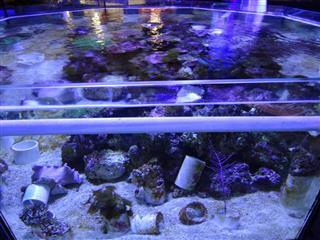 Image of marine aquarium
