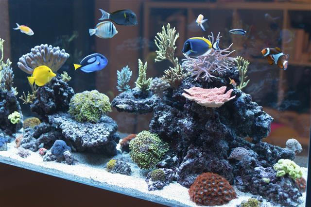 Reef Fish aquarium