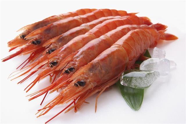 large shrimp