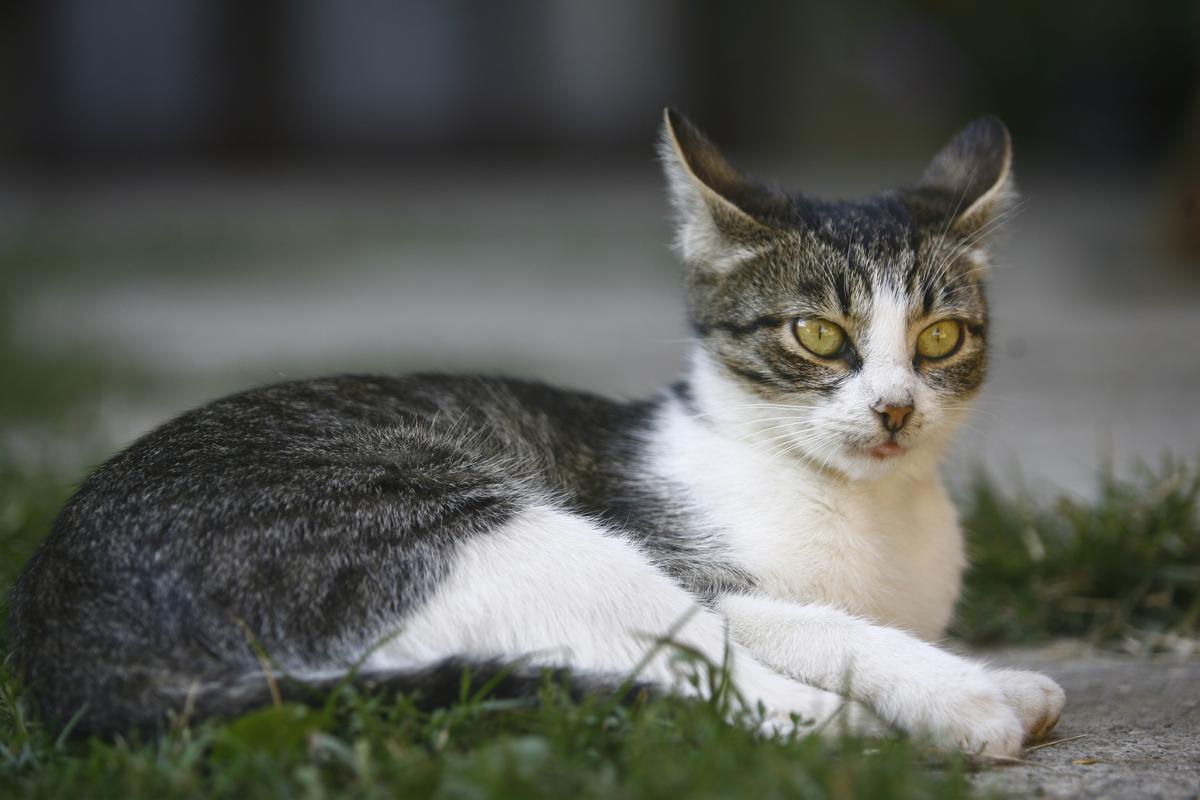 kitten adoptions atlanta
