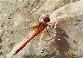 Aqua Dragonfly