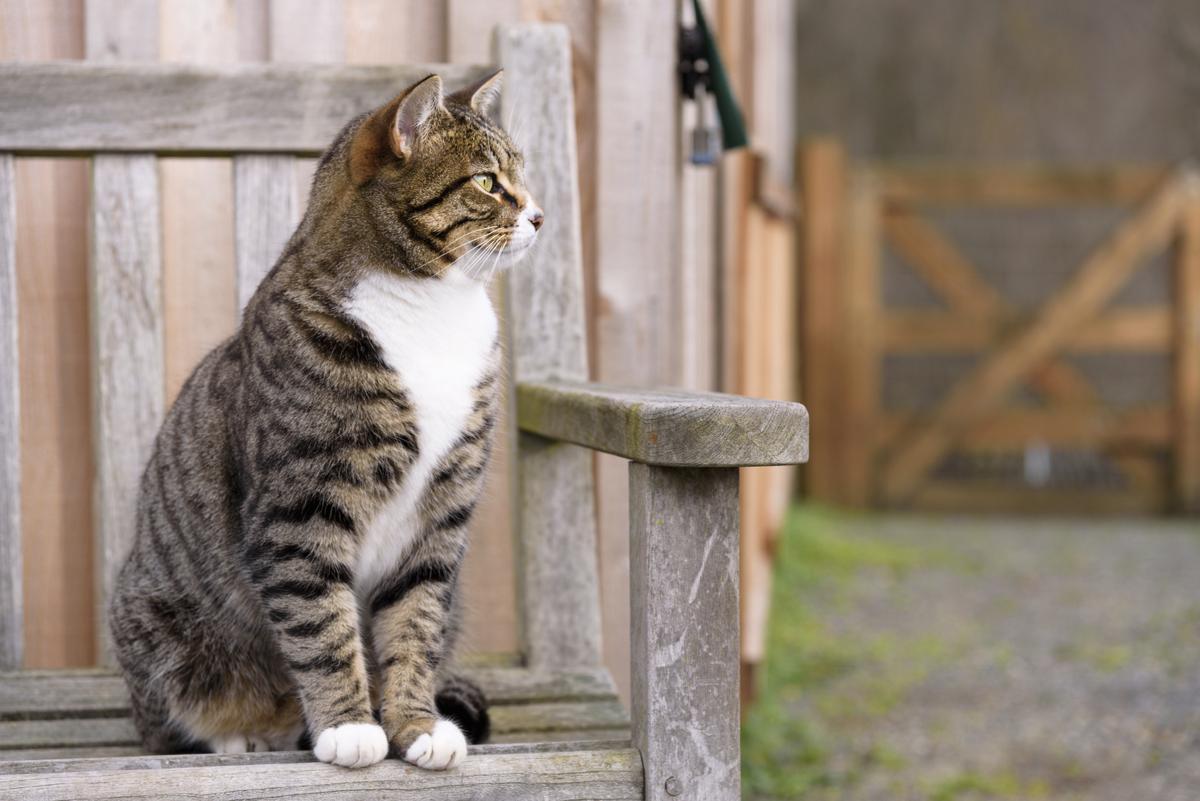 Male cat blockage