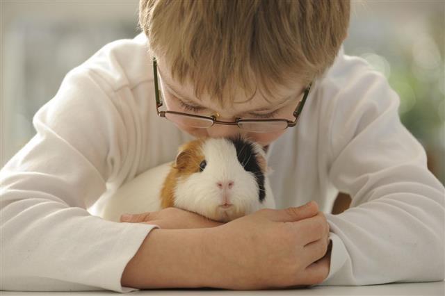 Boy hugging guinea pig