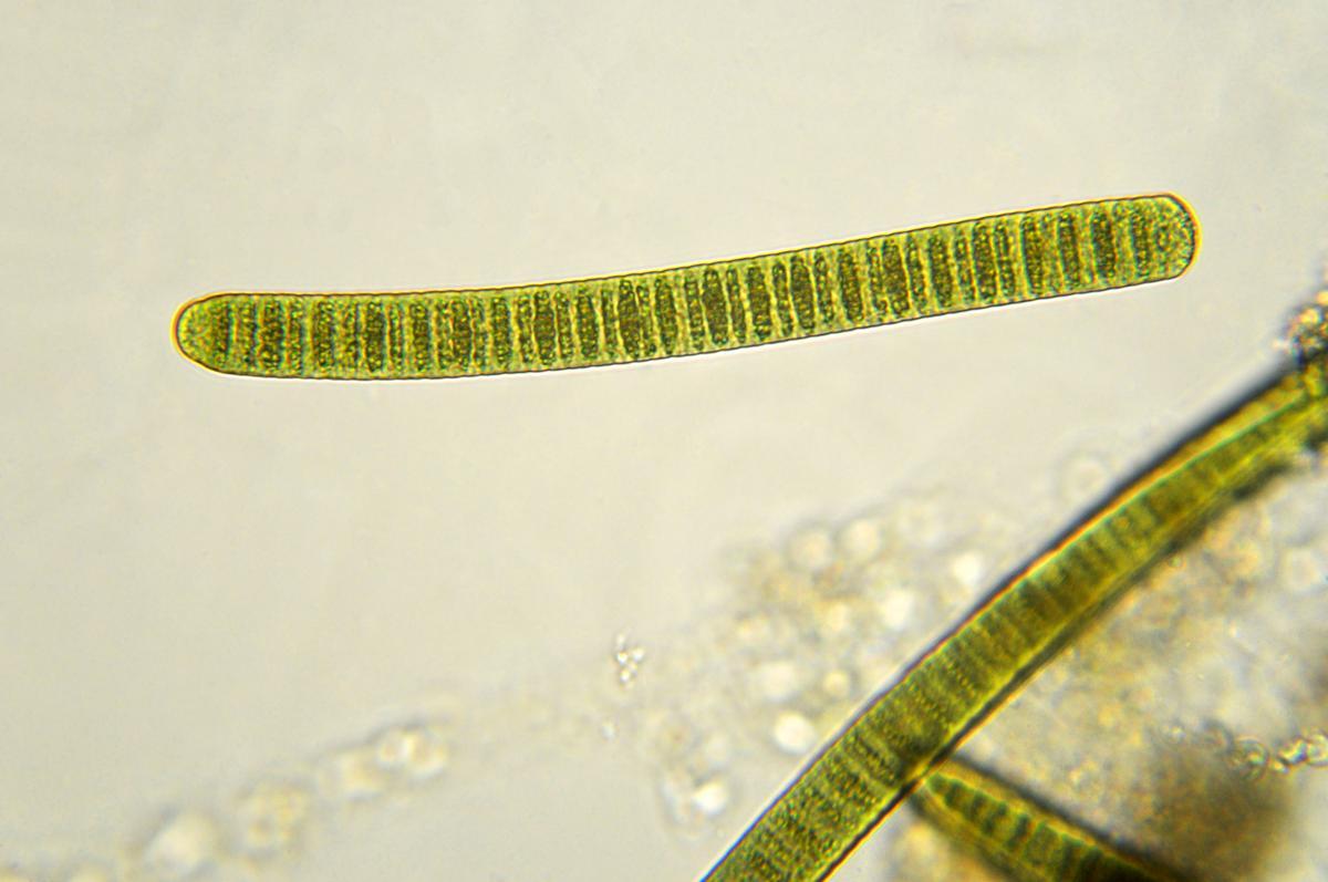 Unicellular Organisms