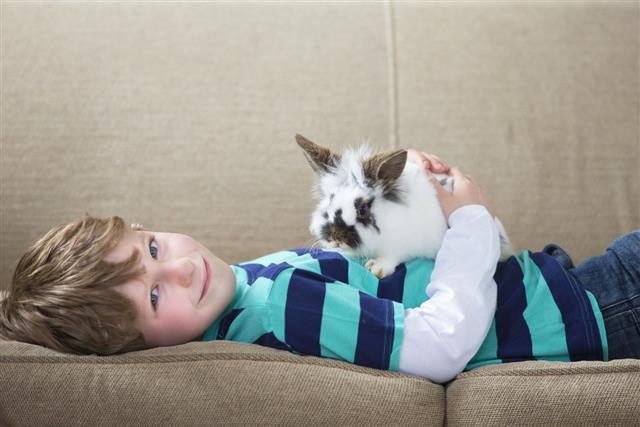 Little Boy feeding Pet Rabbit