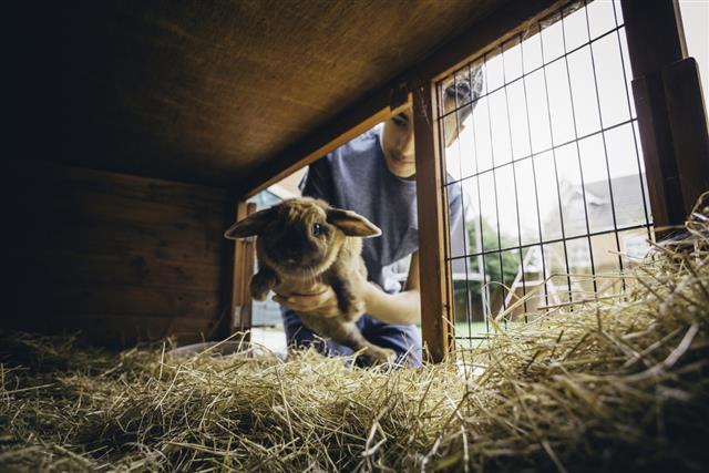 Putting the Rabbit Back