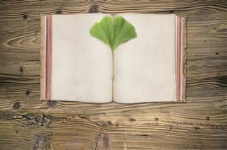 Ginkgo tree leaf in book