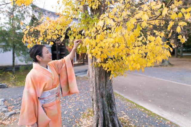 woman looking at ginkgo tree