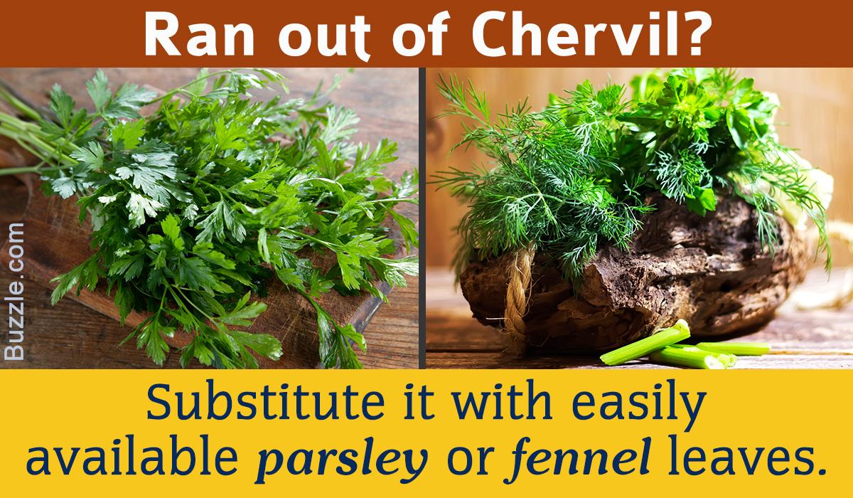 Chervil Substitutes