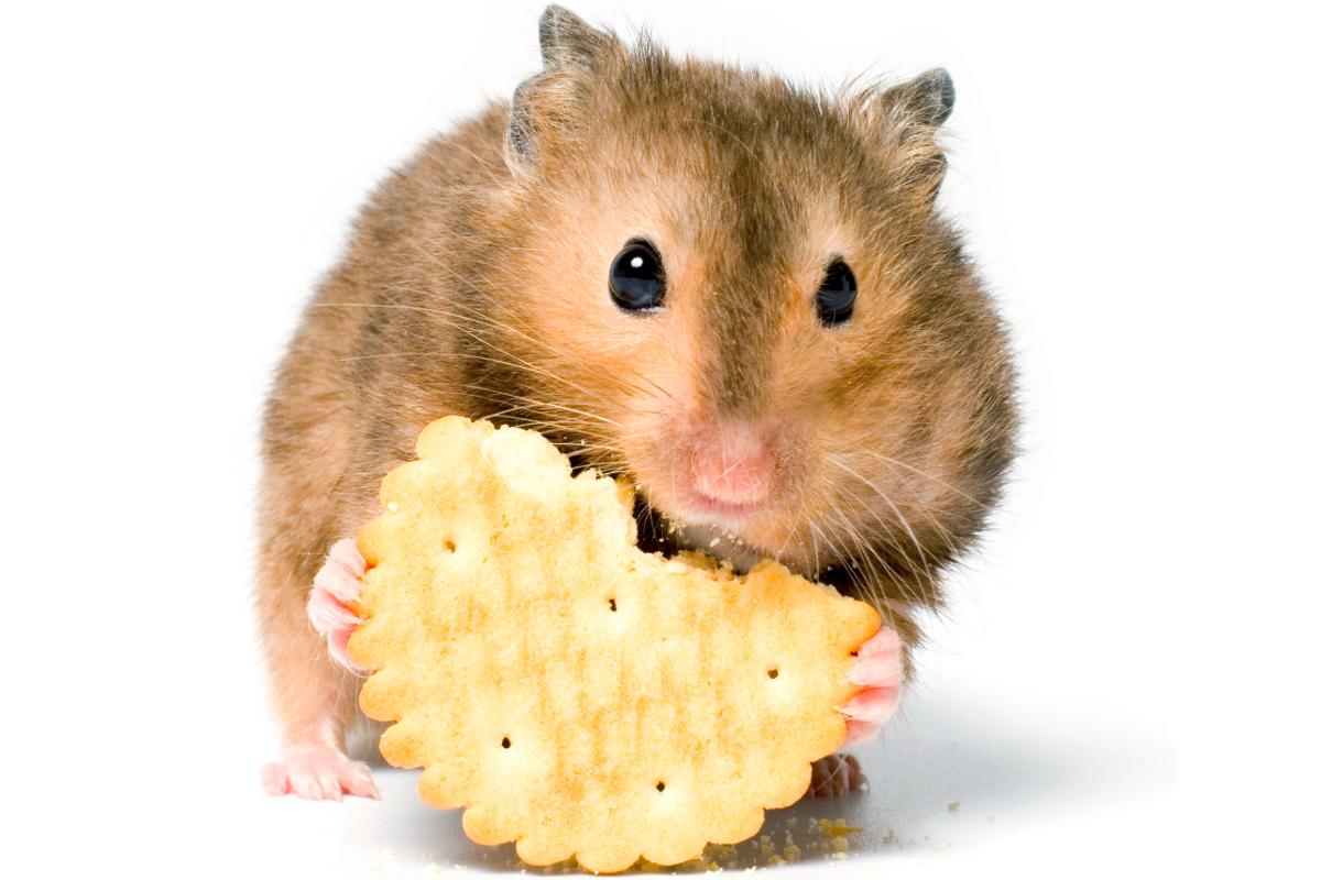 Best Hamster Food Mix