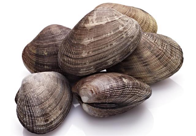 Close-up of a few closed clamshells