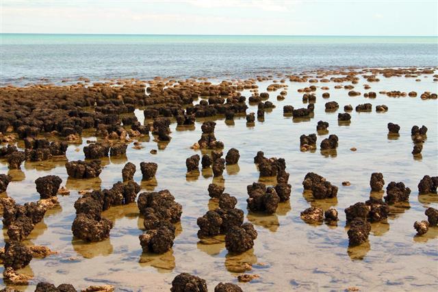 Stromatolites in west australia