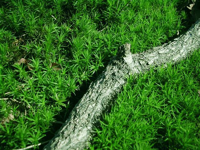 Green microcosm