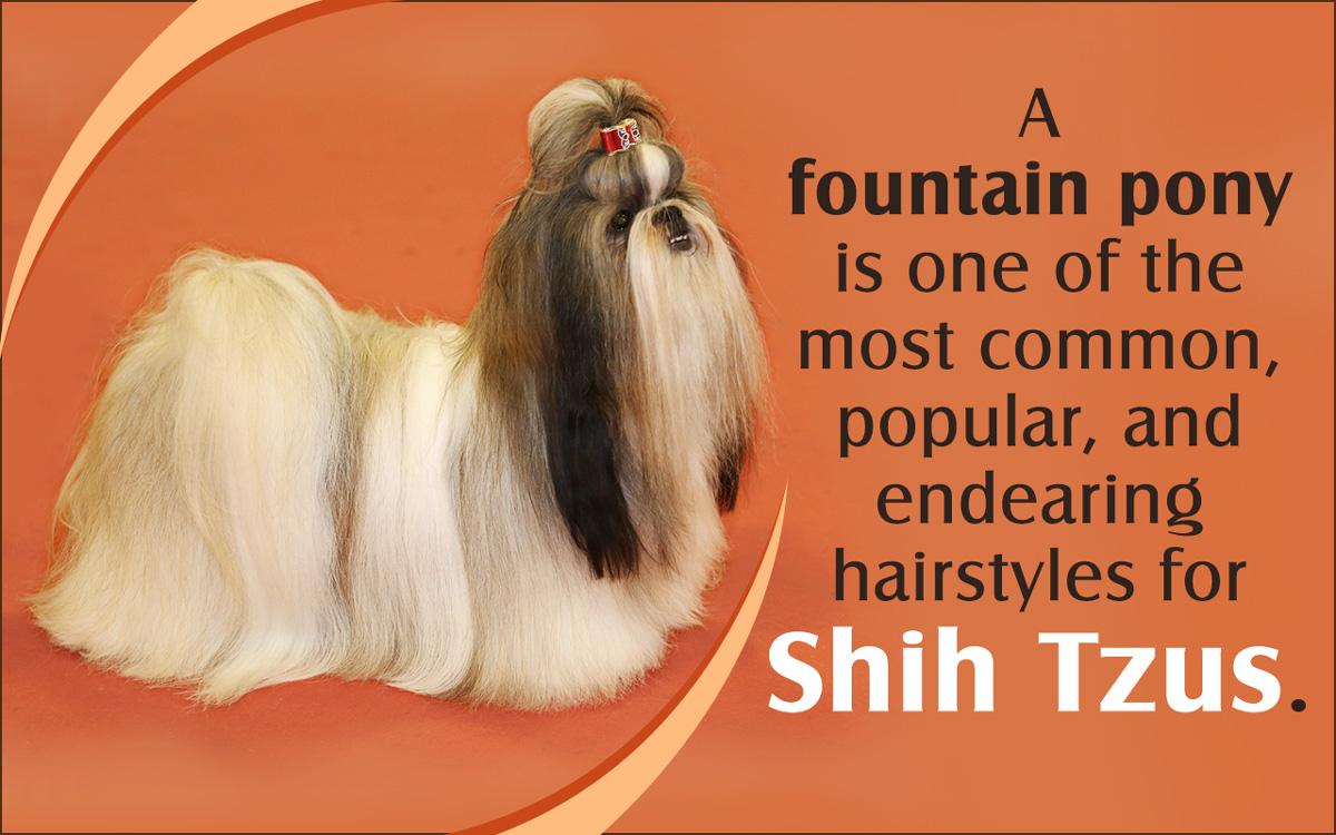 Shih Tzu Grooming Styles