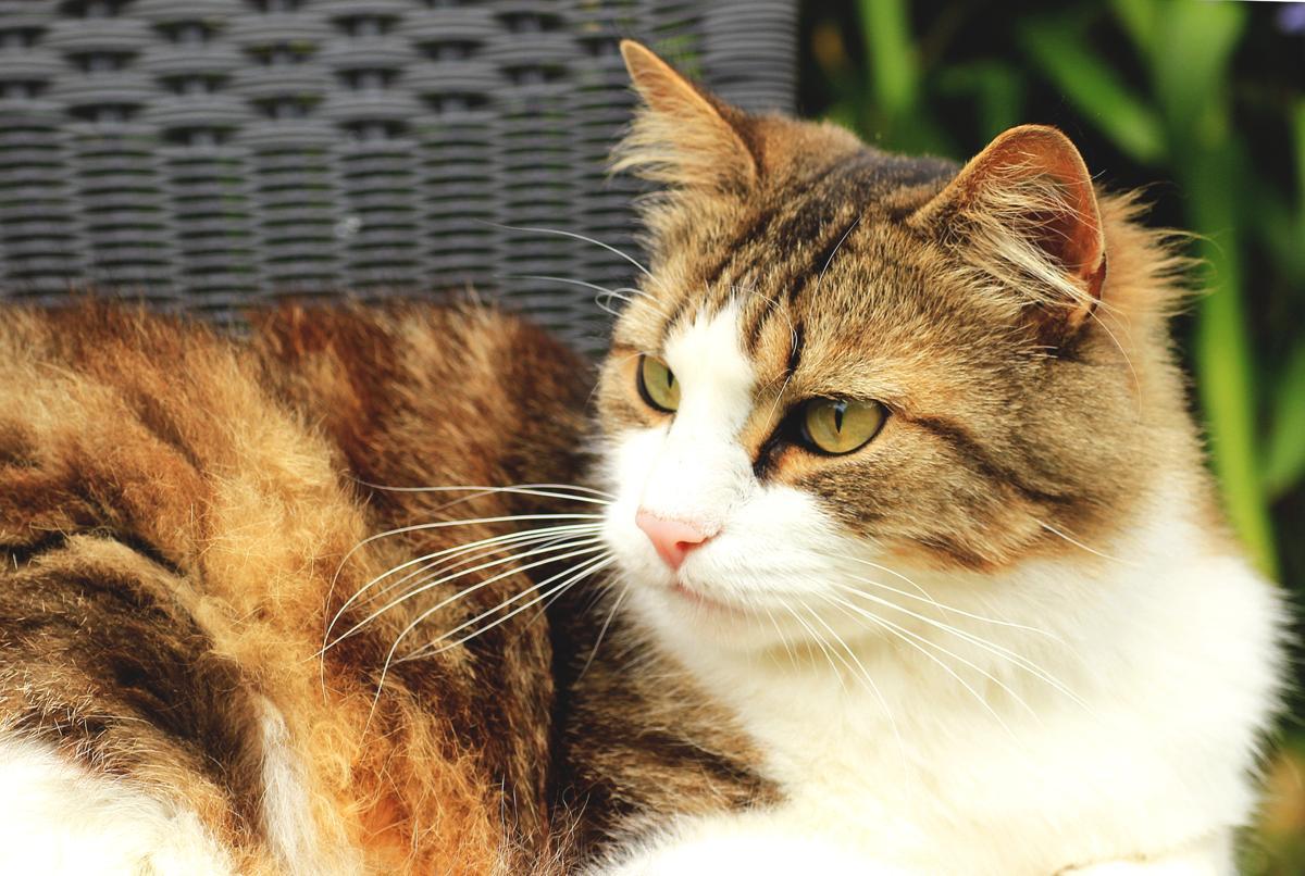 arctic cat wildcat forum
