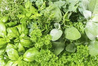 Fresh herbs basil marjoram parsley rosemary thyme sage