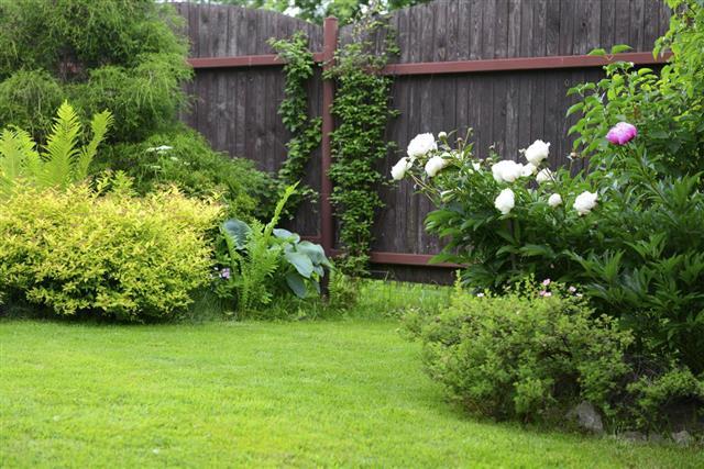 ornamental garden with lawn