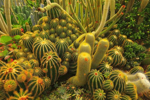 Cactus green foliage garden at desert landscape