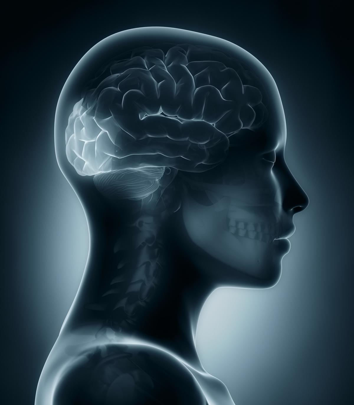 Functions of the Cerebral Cortex - Bodytomy |Visual Cortex