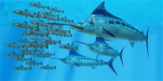 aquarium swordfish
