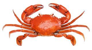 Crab Animal