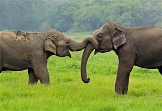 Tropical animal elephants