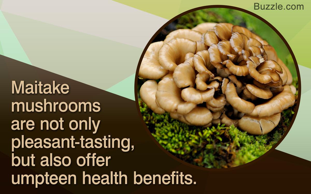 Maitake Mushroom Recipes