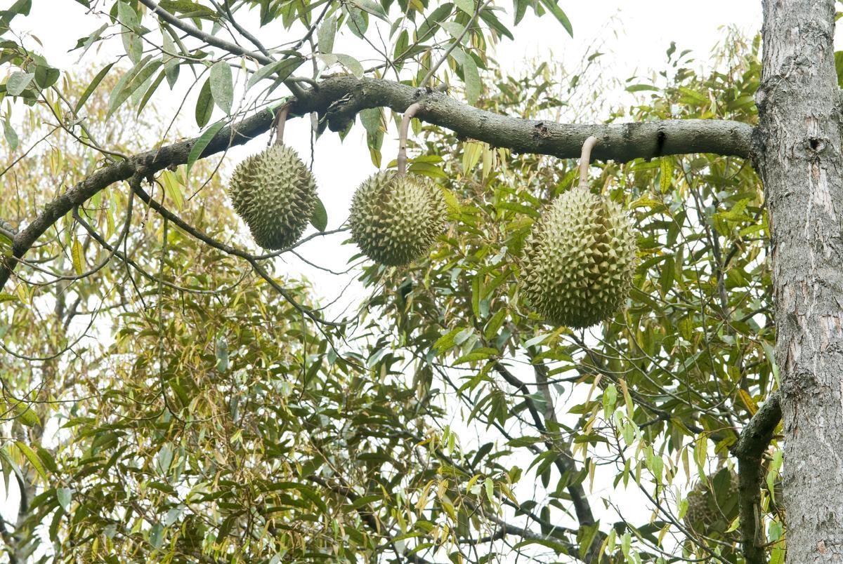 tropical rainforest plant life