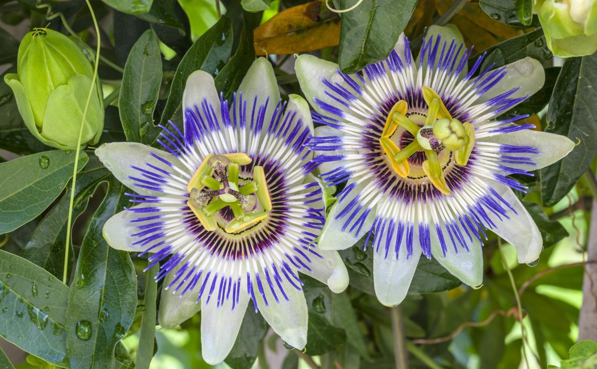 Tropical Rainforest Plant Life - Gardenerdy