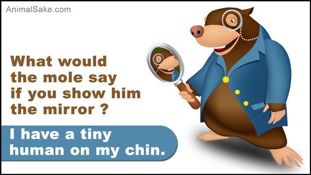 Mole holding mirror