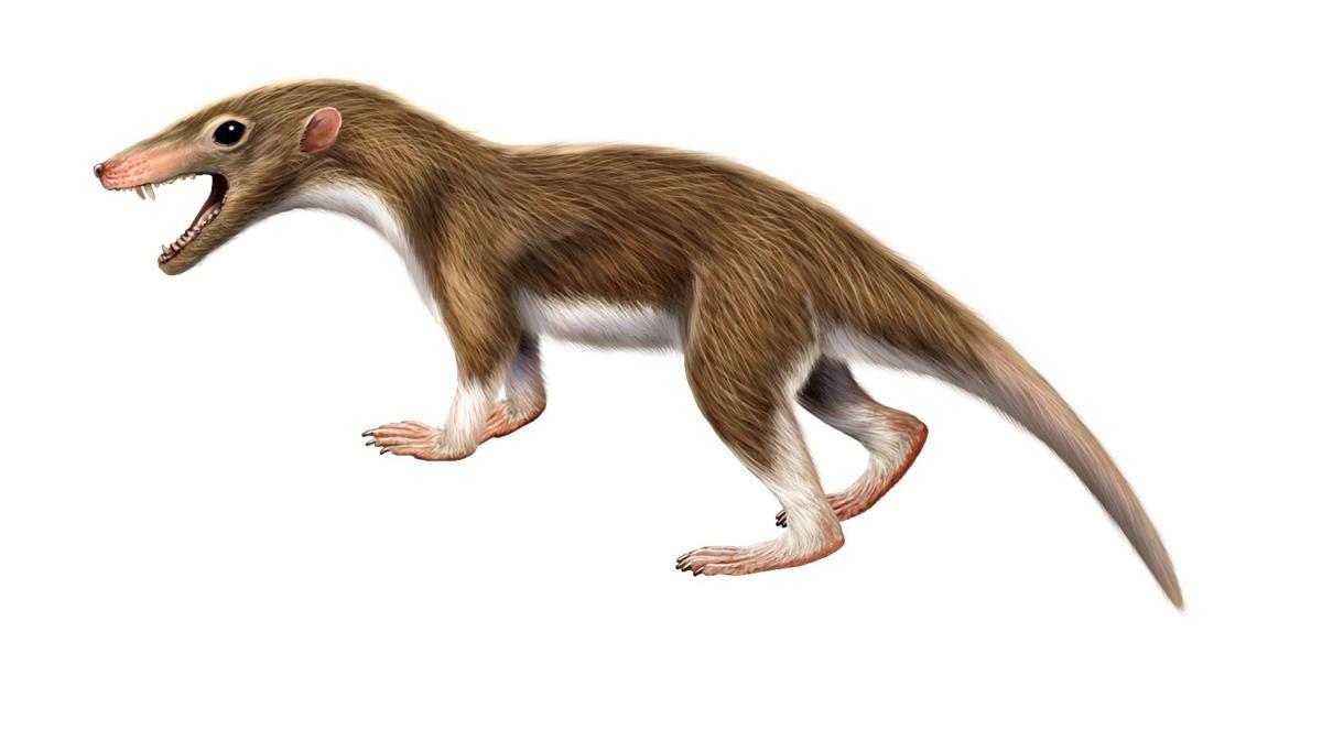 Triassic Animals List Triassic Period Animal...
