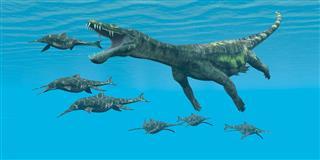 Nothosaurus Reptiles