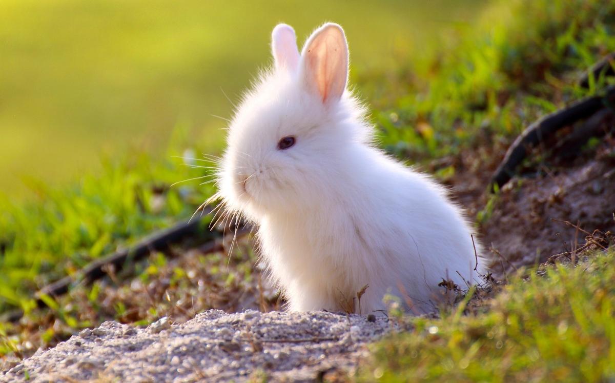 Cute Rabbits A List of 199 Cute Bun...