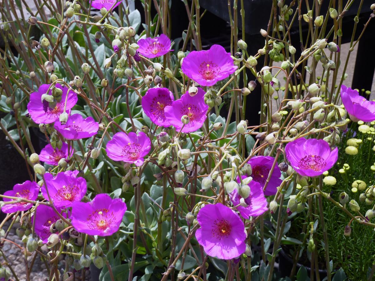 Atacama Desert Plants