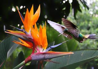 Hummingbird at flower