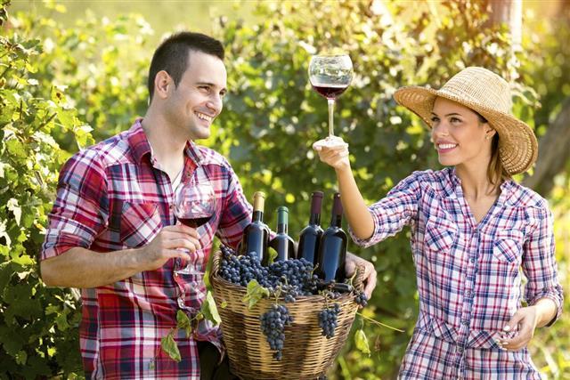 couple winegrower tasting wine