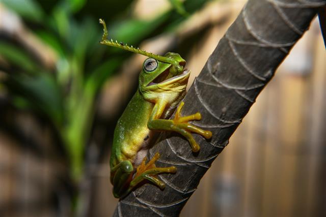 Frog VS Grasshopper