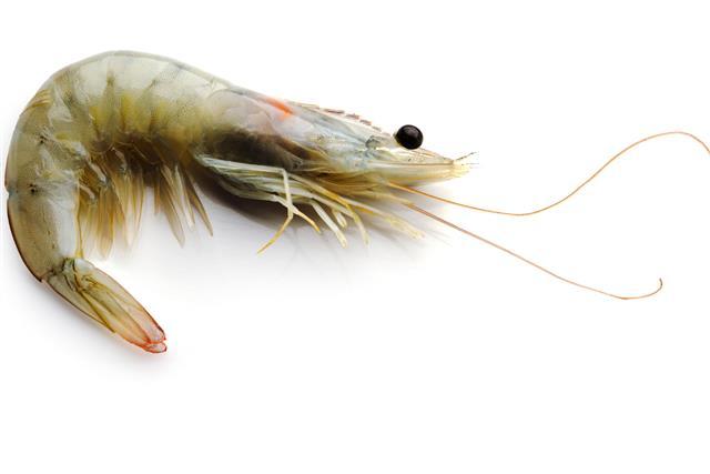 Shrimp close up