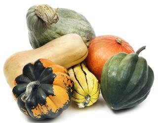 Winter Squash Gourd Family