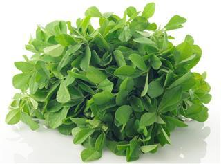Fresh Green Fenugreek Leaves