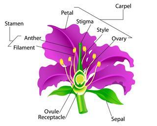 Anatomy of Flower